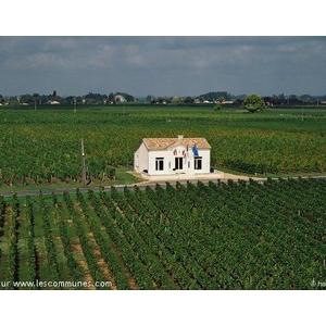 """Il s agit de la Mairie de St Aignan construite en 1878 et qui est totalement insolite par son environnement particulier. En effet, la mairie est entièrement isolée au milieu des vignes, telle """"une île dans une mer de vignes"""". et excentrée du bourg et des"""