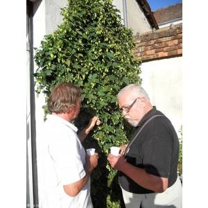 Plante de houblon de Watou qui pousse a Mezieres