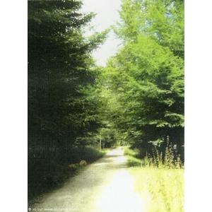 Allée forestière. la Commune est couverte à 75 % par la forêt, en majeure partie privée.