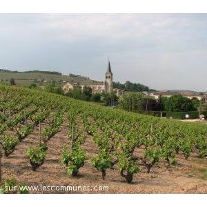 L église sur fond de vignes