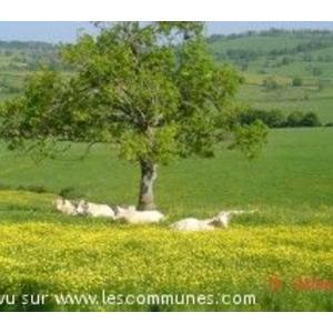paysage Brionnais