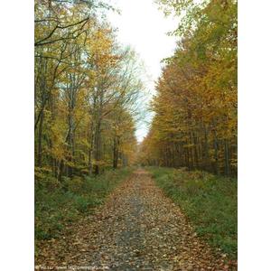 Chemin forestier à Canteleu